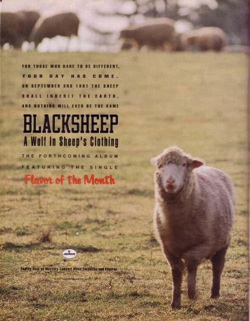 black sheep ad